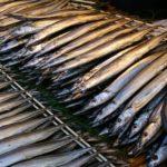 サンマが記録的不漁と不漁の原因は?高級魚になり、代わりはイワシ?
